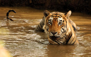 tiger-reserve