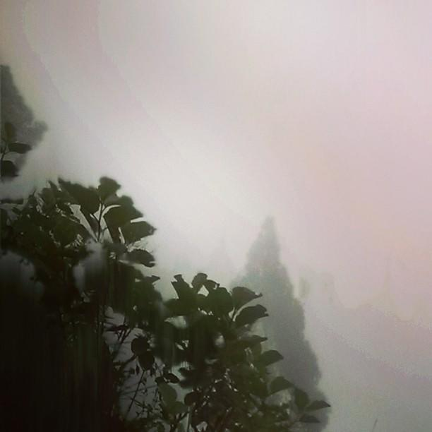 darjeeling rain