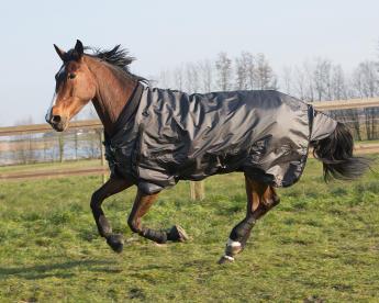 Een paard galoppeert in de weide