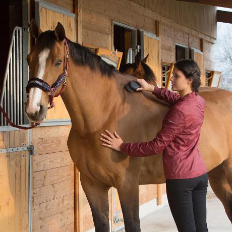bien-etre-pansage-cheval-equitation-fouganza-3