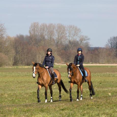 bien-être-cheval-au-travail-equitation-fouganza-decathlon-6