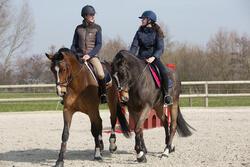 Hoofdstel + teugels Tinckle ruitersport bruin - pony en paard - 1046612