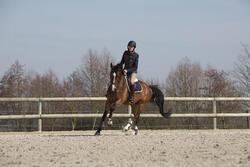 Hoofdstel + teugels Tinckle ruitersport bruin - pony en paard - 1046654