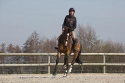 Hoofdstel + teugels Tinckle ruitersport bruin - pony en paard - 1046657