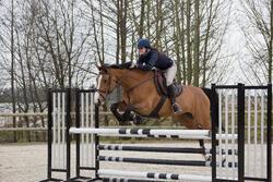 Borstriem paard Schooling zwart - maat paard - 1046731