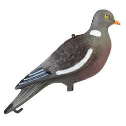 Lockvogel Taube