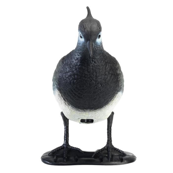 Lokvogel kievit