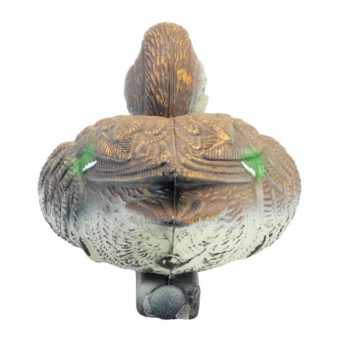 Lokvogel wijfjesstaling