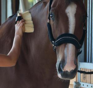 pansage-bien-etre-cheval-fouganza-equitation