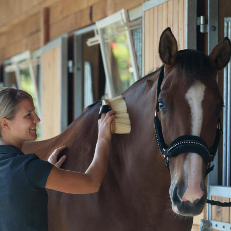 bien etre pansage cheval equitation fouganza 2