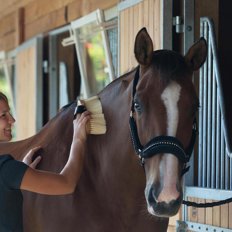bien-etre-pansage-cheval-equitation-fouganza-2