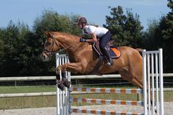 Zadeldek Jump ruitersport - paard - 1126059
