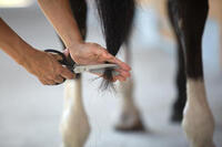 Žirgo ir ponio kailio priežiūros žirklės