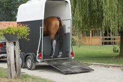 Neopreen staartbeschermer ruitersport paard zwart - 1126339