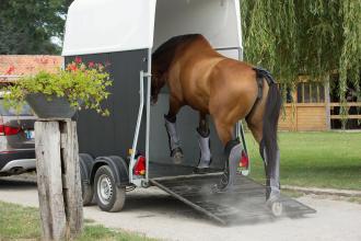 bien-equiper-son-cheval-pour-le-transport
