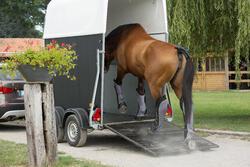 Transportbeschermers Traveller 500 ruitersport zwart en grijs x4 - maat paard - 1126387