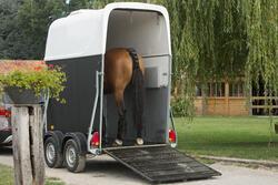 Neopreen staartbeschermer ruitersport paard zwart - 1126391