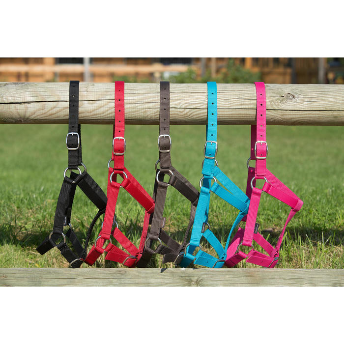 Schooling Horse Riding Halter for Horse or Pony - Black