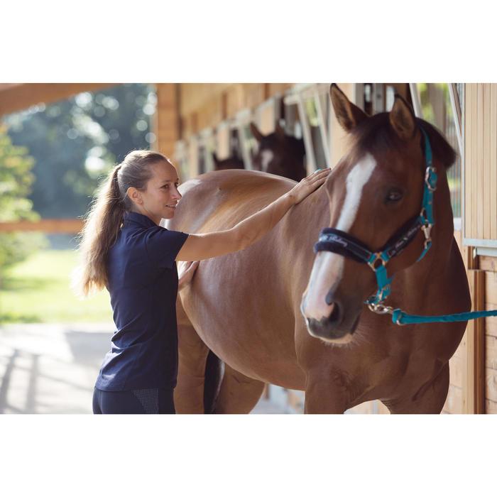 Halfterset Winner mit Führstrick Pony/Pferd türkis