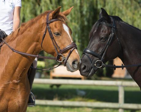twee paardenkoppen