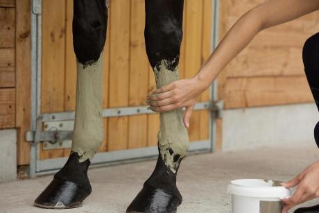 Alt/soin du cheval