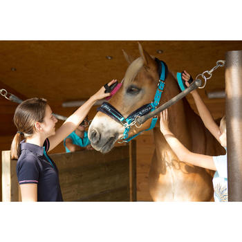 Licol + longe équitation poney et cheval WINNER - 1127167