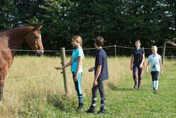 Jongenspolo Horse met korte mouwen ruitersport - 1127169