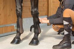 2 open peesbeschermers ruitersport pony en paard Riding - 1127212