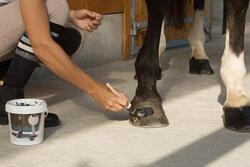 Zwarte hoefzalf voor onderhoud ruitersport paarden en pony's 1l - 1127220