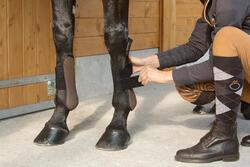 2 open peesbeschermers ruitersport pony en paard Riding - 1127225