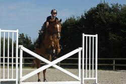 Hoofdstel + teugels Tinckle ruitersport bruin - pony en paard - 1127237
