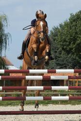 Springsingel paardrijden leer ROMEO kastanjebruin - 1127244