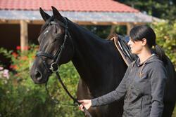 Hoofdstel + teugels Edimburgh ruitersport - pony en paard - 1127264