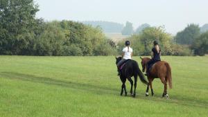 cheval dans un pré