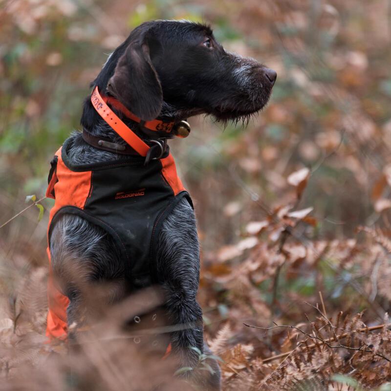 Parvenir à canaliser l'énergie de votre chien : est-ce indispensable ?