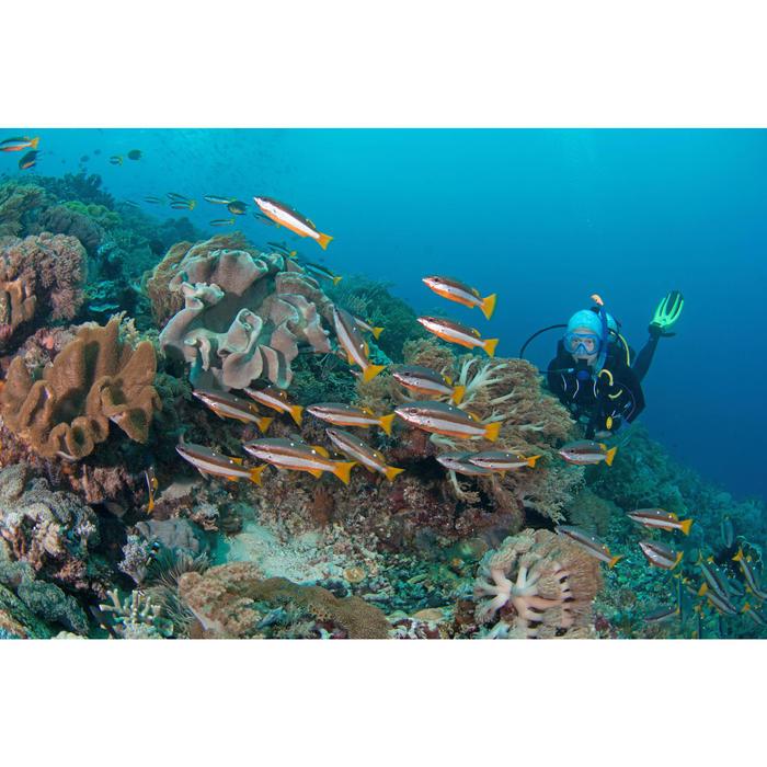 Masque de plongée ou de snorkeling 100 adulte enfant - 1146023