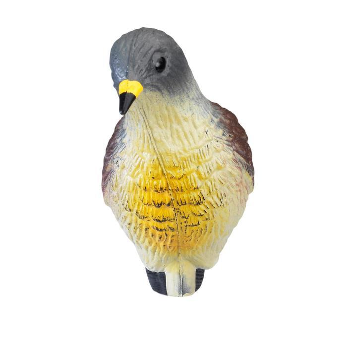 Lokvogel lijster kramsvogel