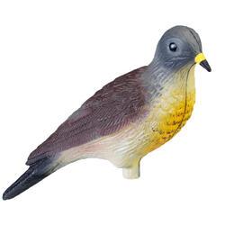 Lokvogel lijster Litorne APR52