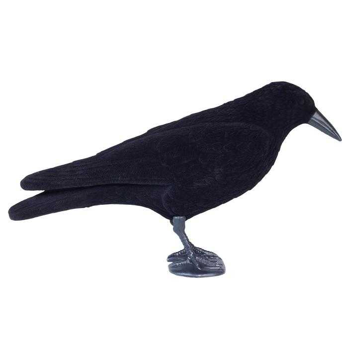 Lokvogel kraai geflockt