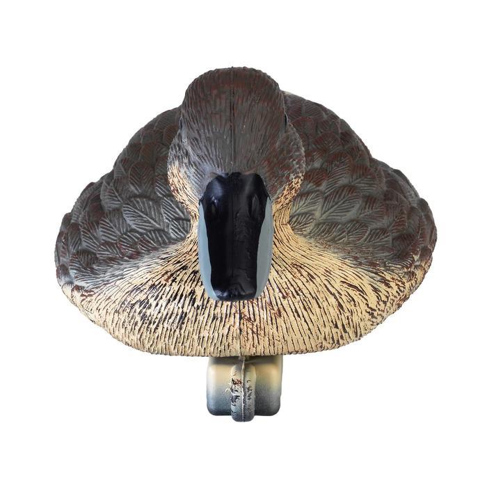 Lockvogel Spießente Weibchen