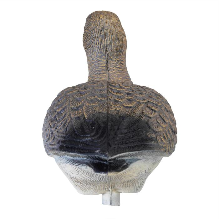 Lokvogel groenpootruiter