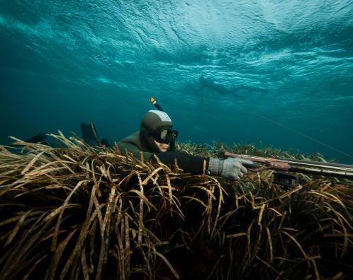 bien choisir combinaison chasse sous-marine subea