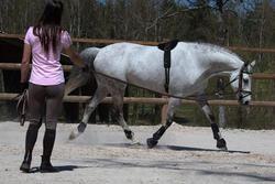 Werksingel ruitersport zwart voor pony's en paarden - 118343