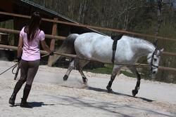 Werksingel ruitersport zwart voor pony's en paarden - 118344