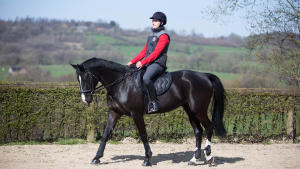 cheval_equitation