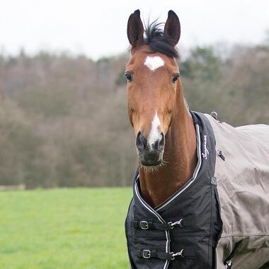 Hoe kies je een paardendeken? -titel