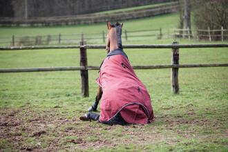 paardendekens: enkele handige weetjes korte tekst