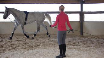 Pferd an der Longe - Bodenarbeit
