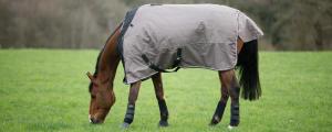 cheval au pré avec une couverture
