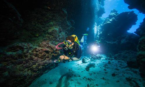 partage de l'émerveillement subaquatique plongée subea decathlon